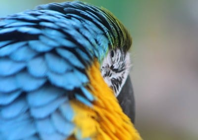 Parrot Macro