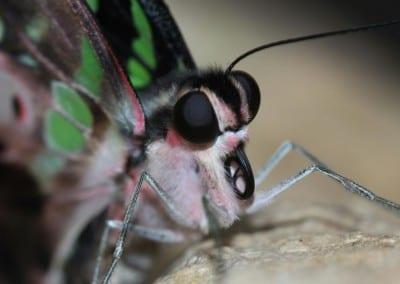 Macro Butterfly Shot