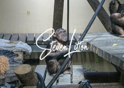 Monkey-World220507-325